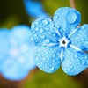 Small thumb flower 54e1dc444c 1280