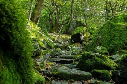 神秘的な森の道