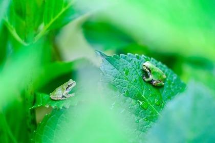 梅雨の草原