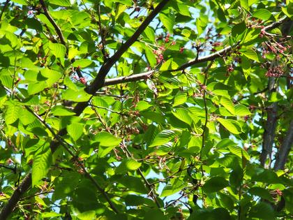 葉桜の風景