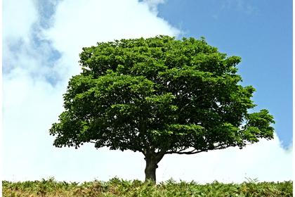 枝を大きくのばした樹木