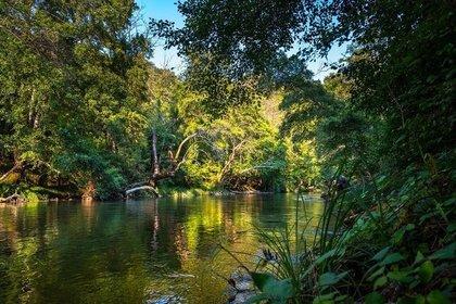 美しい湖と森