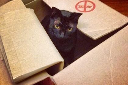 箱に入ったクロネコ