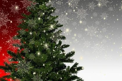 クリスマス用のモミの木