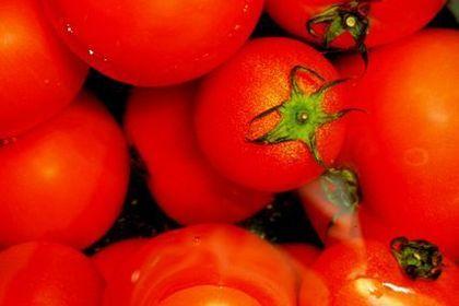 多くのトマト