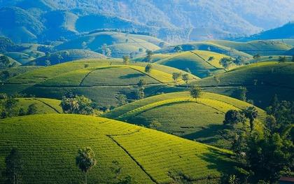 緑が綺麗な山