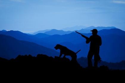 使役される猟犬