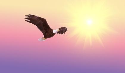 飛翔する鳥