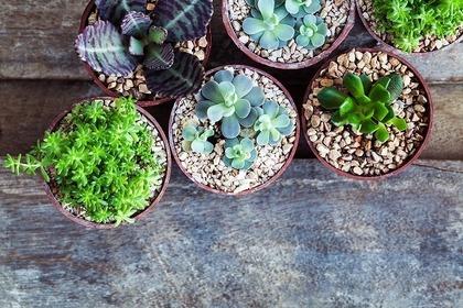 鉢植えのグリーン