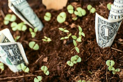 お金が生えている光景