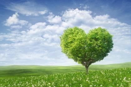 木を使った贈り物