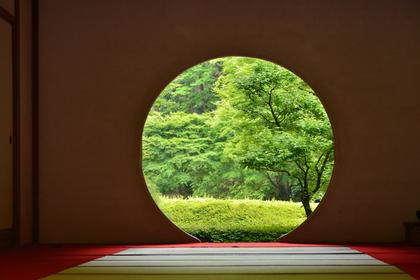 円系の隙間から見える木々