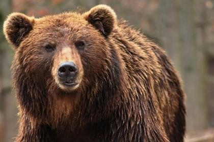 大人しい熊