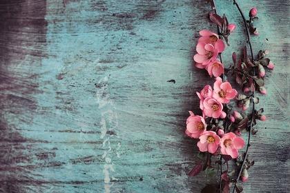 綺麗なピンクの花