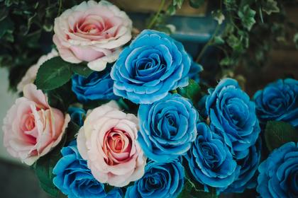 水色の薔薇